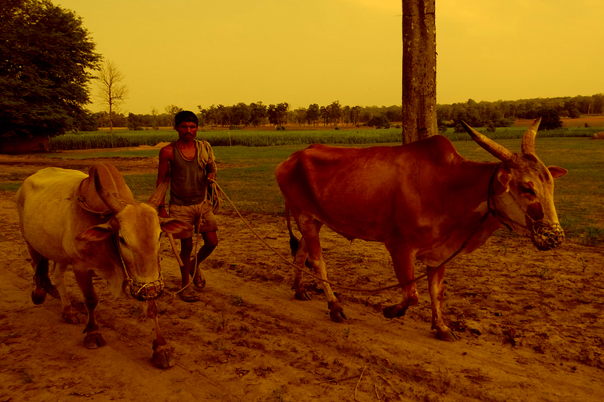 indian economy and agriculture sector, indian farmer and powerty, indian agriculture and problems faced by farmers, indian farmers life