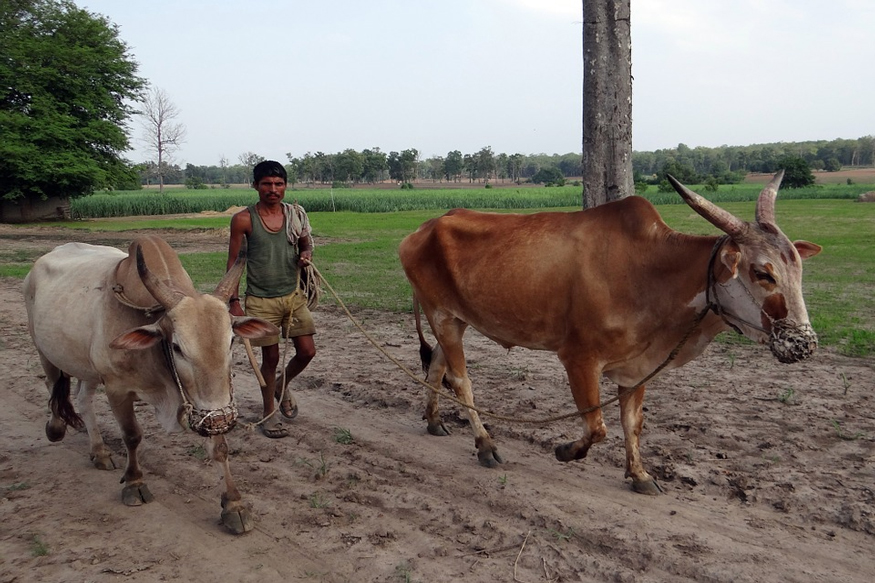 Indian Economy and Rural india, Powerty and Hungriness